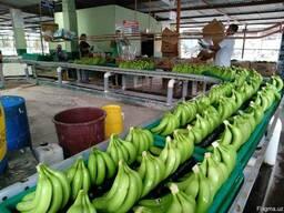 Банан Cavendish оптом из Эквадора