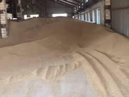 Bug'doy пшеница