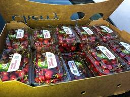Черешня свежая ( Fresh Cherry)