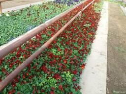 Цветы для сад