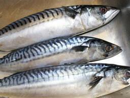Дальневосточная замороженная рыба - фото 3