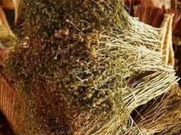Гармала обыкновенная ( Péganum hármala) опт поставка из Узб