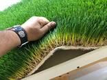 Гидропонный зелёный корм - фото 1