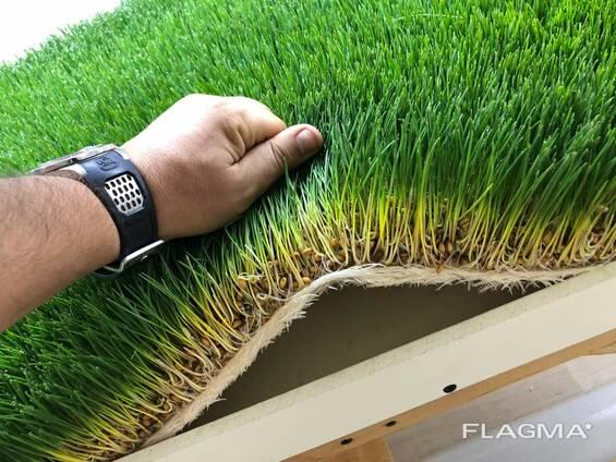 Гидропонный зелёный корм