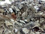 Голевые обрезки от сырых шкур КРС для производства желатина - photo 4