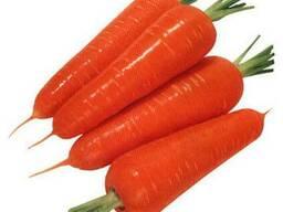 Компания ООО Агроконтинент предлагает Семена моркови
