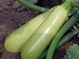 Компания ООО Агроконтинент предлагает Семена кабачков