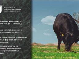Крупный рогатый скот (КРС)
