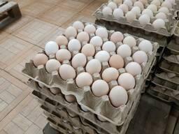 Куриные яйца оптом и на экспорт