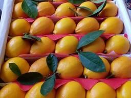 Лимоны оптом и на экспорт