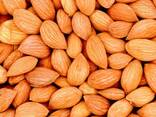 Масло абрикосовой косточки - фото 2