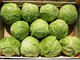 Молодая капуста (Green Fresh)