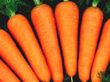 Морковь - фото 2