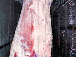 Мясо БЕЛАРУСЬ ГОСТ говядина корова-бык Охл. -Замороженное с доставкой в Ташкент, Самарканд