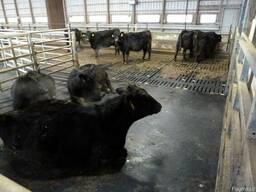 Напольное покрытие для животноводства от производителя!