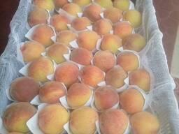 Персик сорта заргалдок из Узбекистана