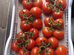 Помидор томат огурцы, капуста, болгарский перец, свежая зеле