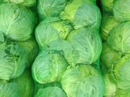 Предлагаем вам разные сорты свежей капусты из солнечного Узбекистана