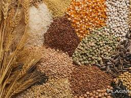 Продаем зерновые и зернобобовые культуры!