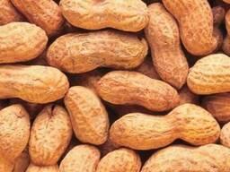Продается неочищенный арахис оптом на прямую от производител