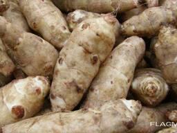 Продается семена Топинамбура и полу готовые продукции