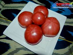 Продам помидоры Пинк парадайз
