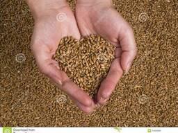 Пшеница 3, 4, 5 класс. Кукуруза, соя, отруби и др.
