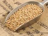 Пшеница 4класс - фото 1