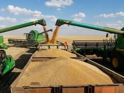 Пшеница, лен, подсолнечник, ячмень