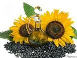 Семена масличных культур(хлопчатник, подсолнух, соя, сафлор) - фото 1