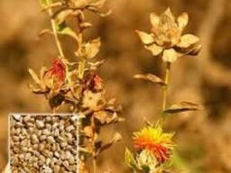 Семена масличных культур(хлопчатник, подсолнух, соя, сафлор) - фото 4