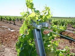 Шпалеры для виноградников