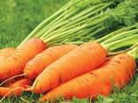 Сушеные овощи и зелень от производителя ! - photo 7