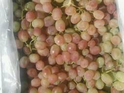 Виноград сорт Тайфи