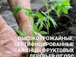 Высокоурожайные саженцы фруктовых деревьев