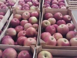 Яблоки 2021(Айдаред, Голден, Гренни Смит) 65