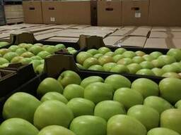 Яблоки из Польши! - фото 3