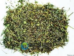 Якорцы стелющиеся трава - трибулус tribulus - фото 3