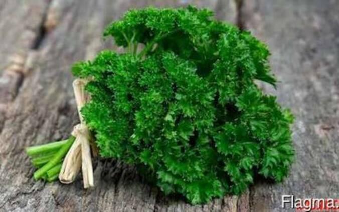 Зелень петрушки, укропа, щавеля, мяты. кориандр