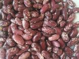 Зеленый мунг маш , фасоль, нут из Узбекистана - фото 3